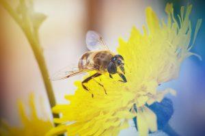 Despre alergia la intepaturi de insecte